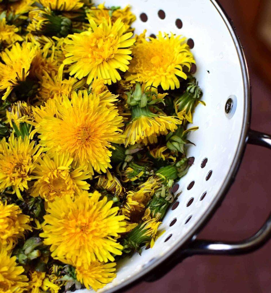 dandelion flowers for making honey